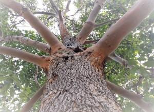 tree (2) - Copy