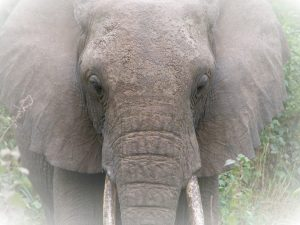 elephant trophy ban reversed